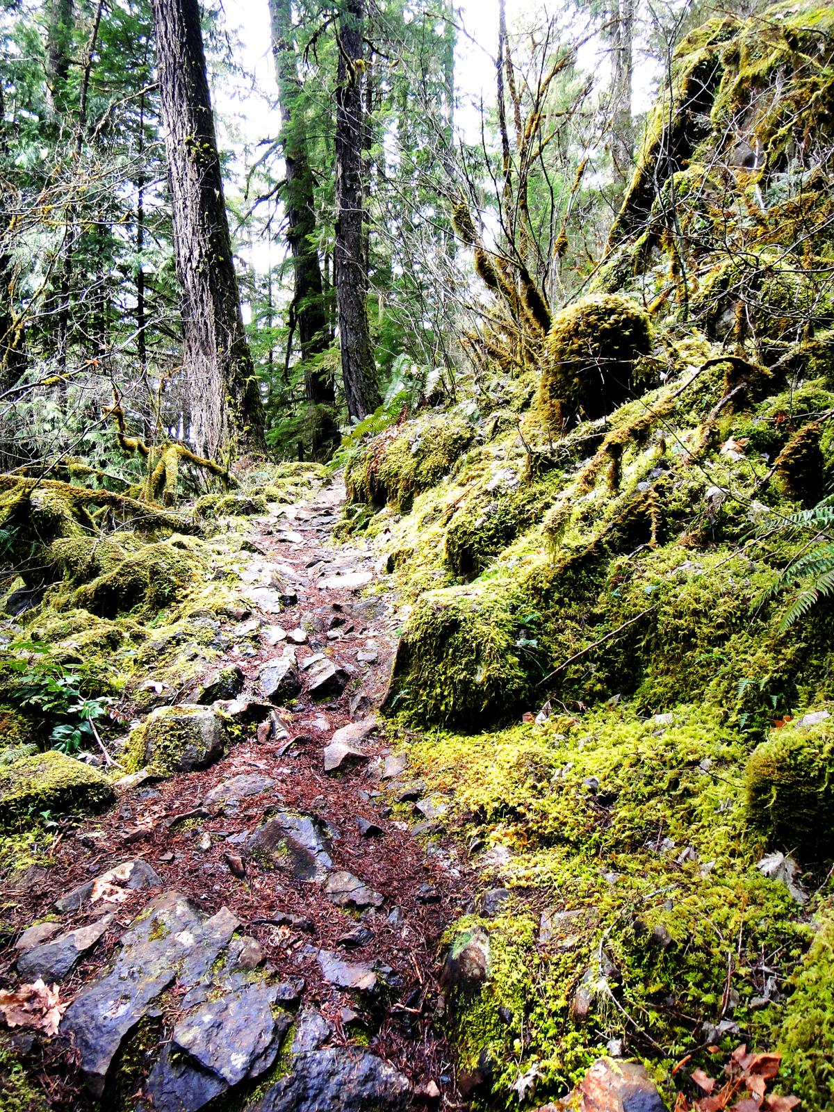 Brice Creek Trail