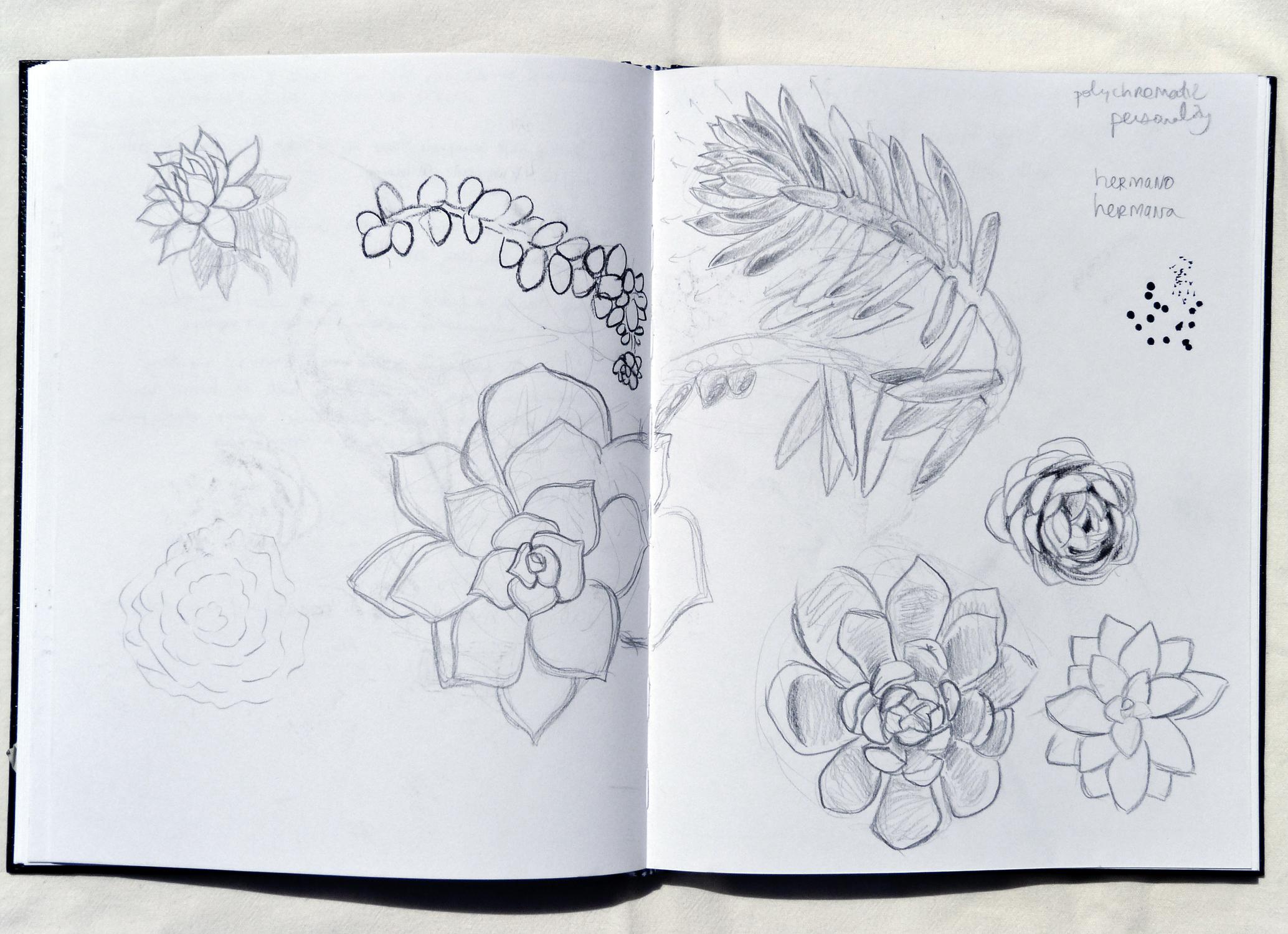 Mini Succulent Studies  Circa 2017