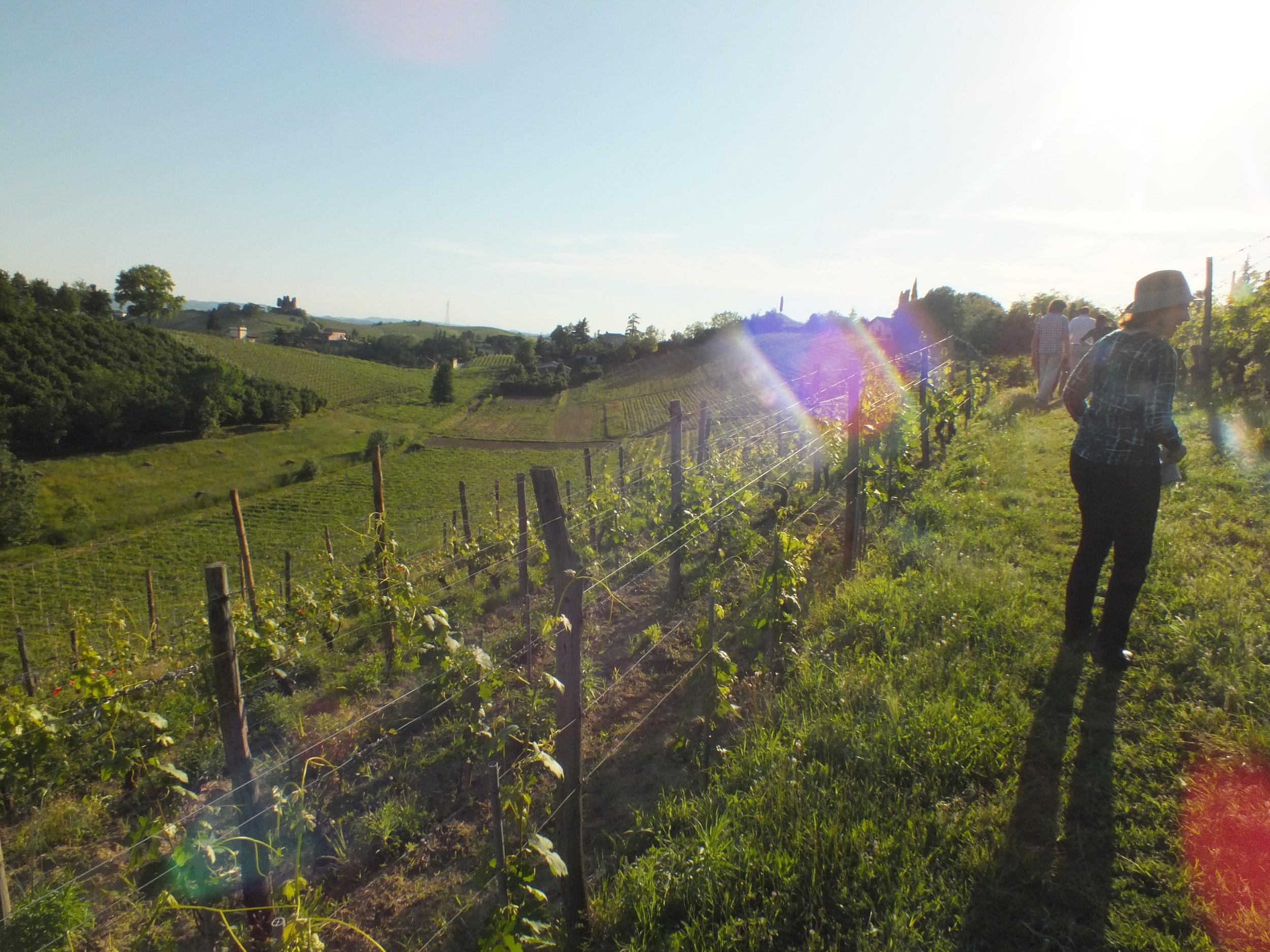 Late Evening Vineyard Tour