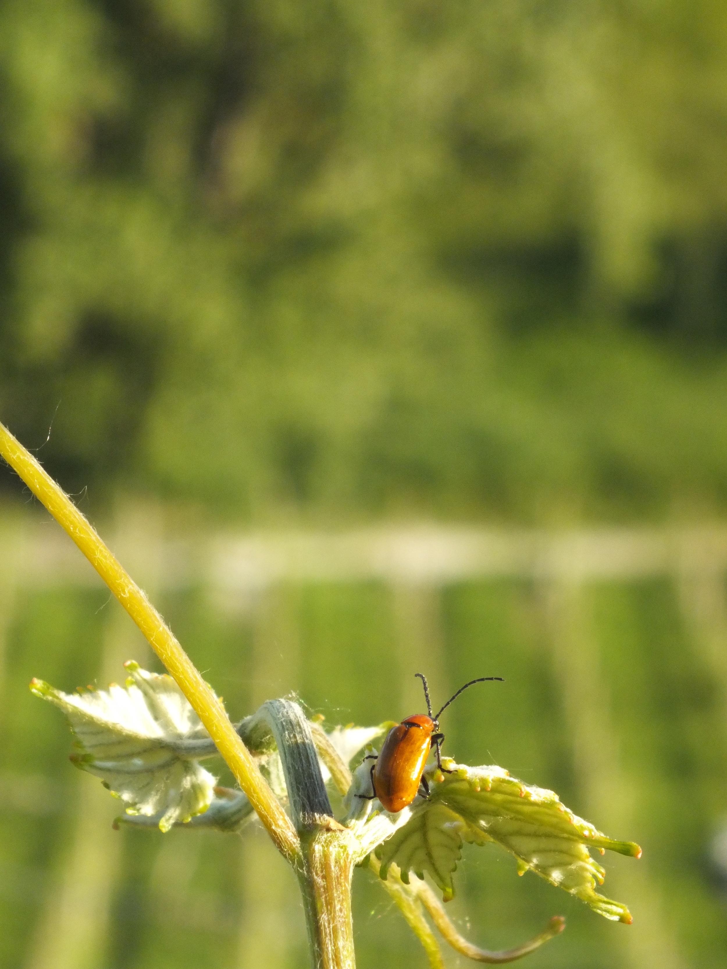 Biodynamic Vineyards at La Barbettalla