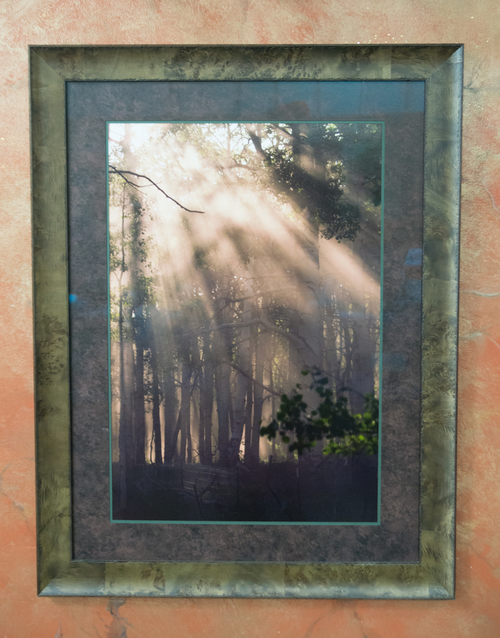 B_Lawson_Sunlit+Forest.jpg