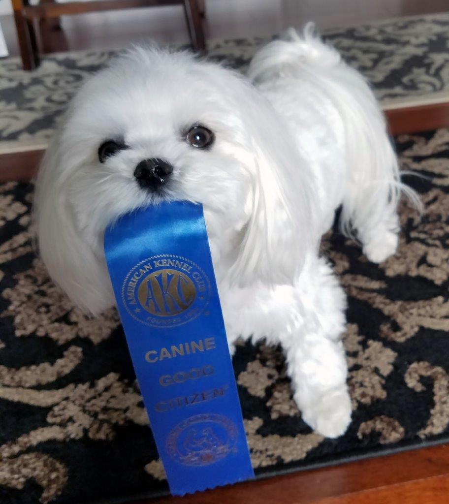 Abbey with AKC Ribbon2.jpg