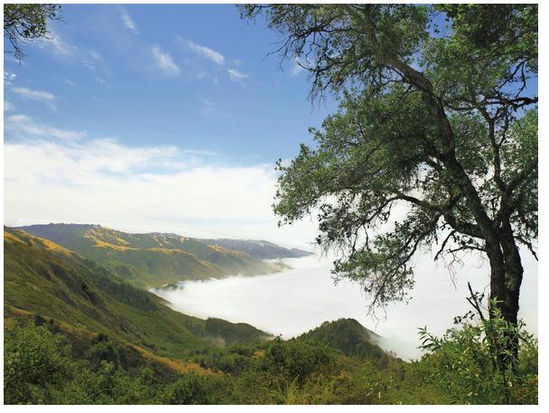 ahhhh,  sacred california