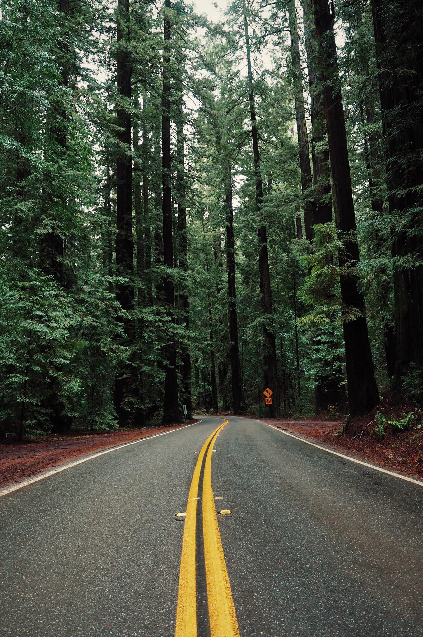 CAredwoods