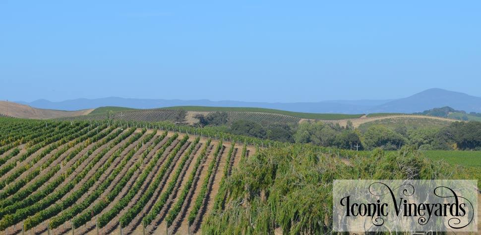 Front-Vineyards-V2.jpg
