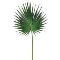 Fan Palm Spray in Green-OPT.JPG