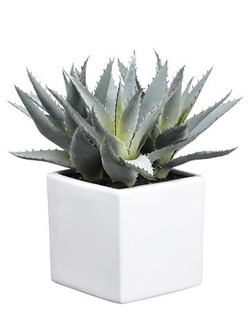 Agave Succulent.jpg