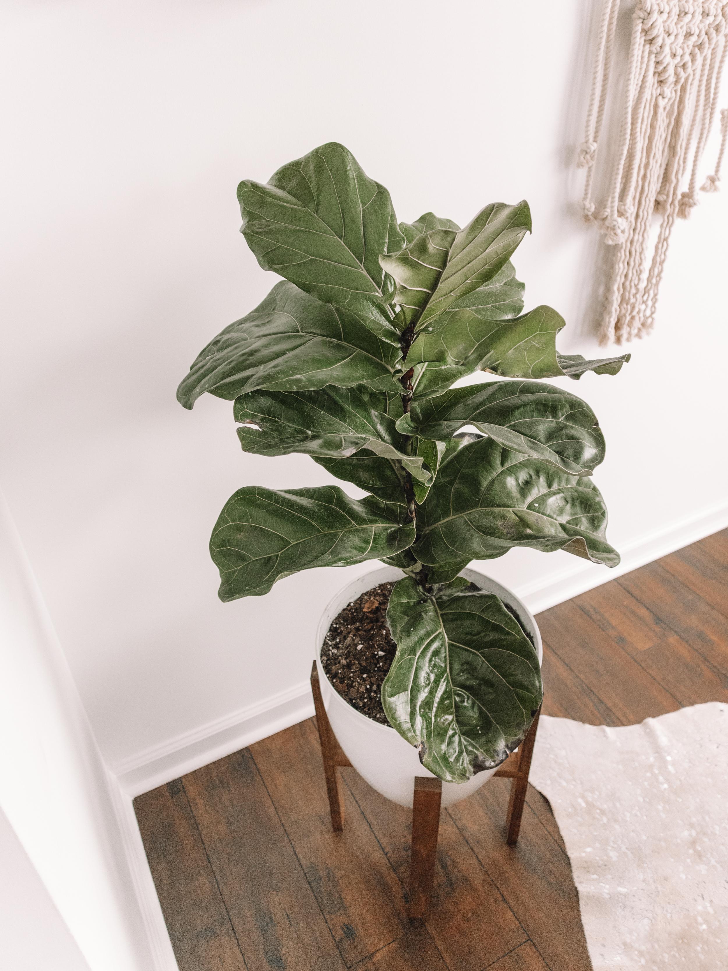 plant-14.jpg