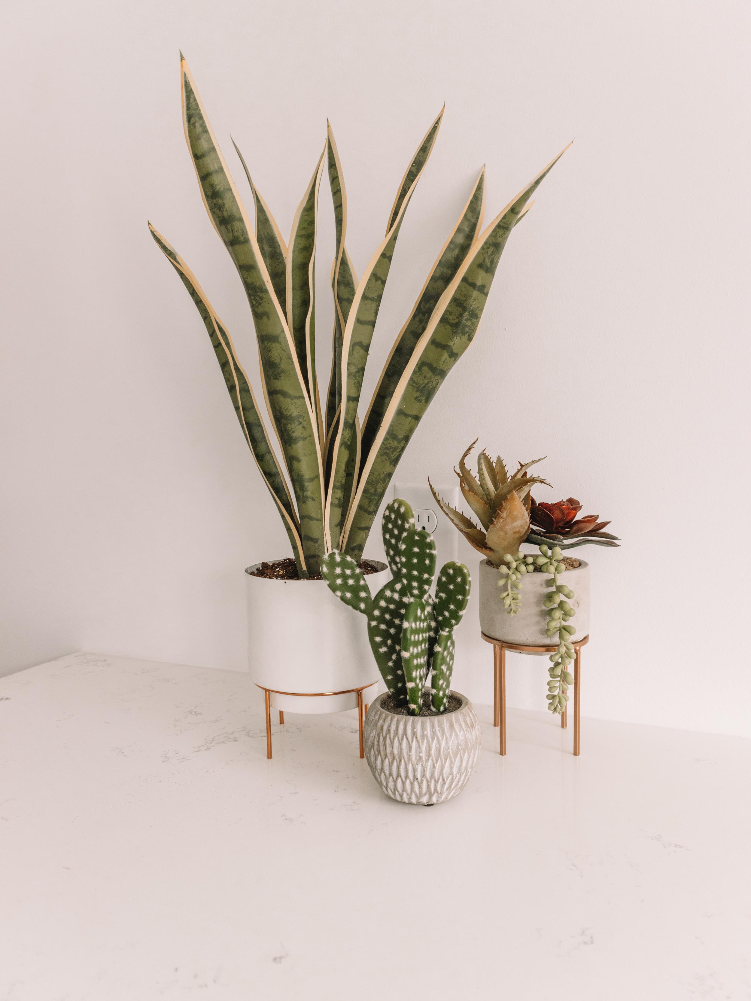 plant-41.jpg
