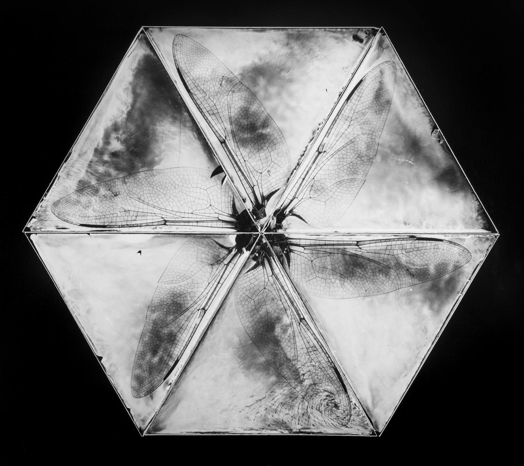 XSS-Brett Henrikson-Henrikson-Chaotic Forms#67.jpg