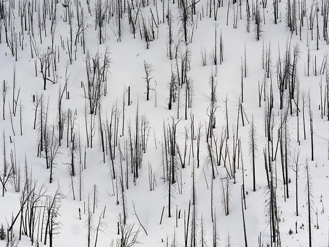 trees_on_fire.jpg