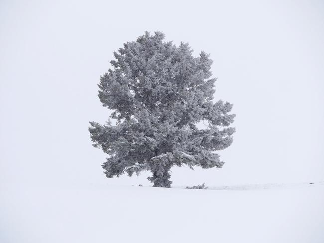 da_tree.jpg