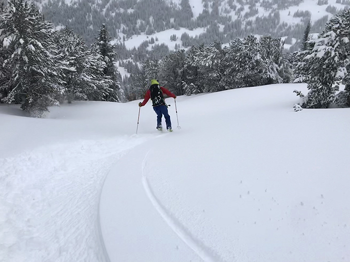whitebark_ski.jpg