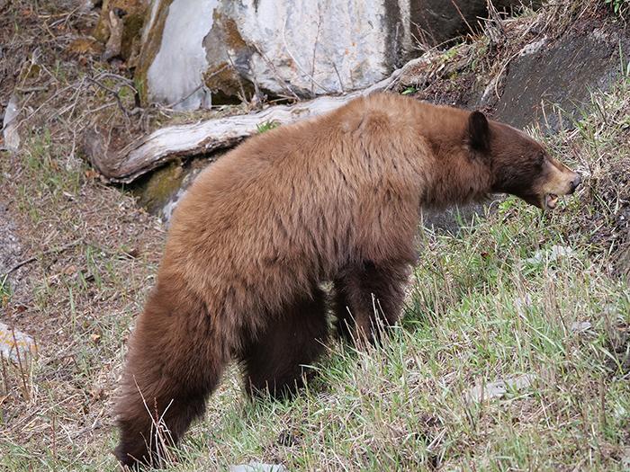 black_bear_002.jpg