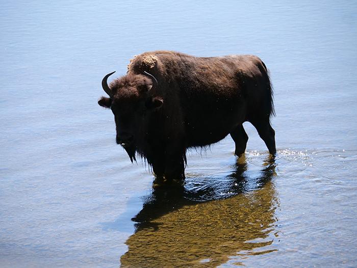 buffalo_ford.jpg