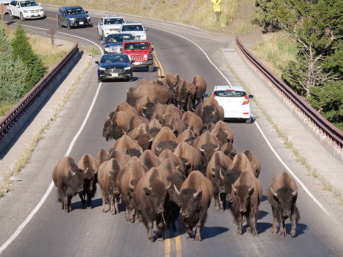 yellowstone_commute.jpg