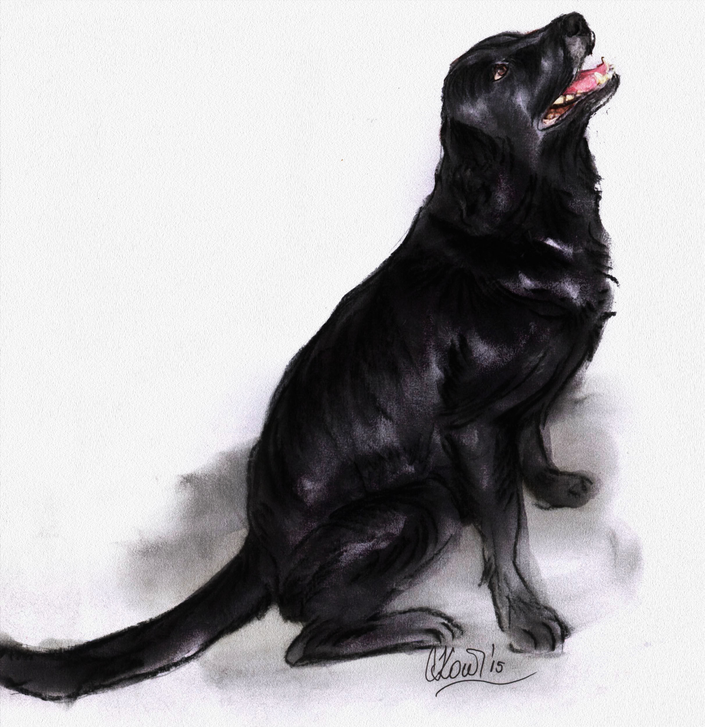 Happy days with Happy the Labrador - Drawing: Sanjicka
