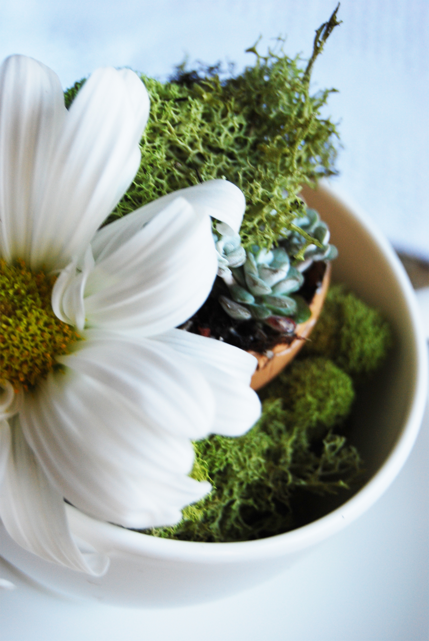 succulent_egg_cups_10.jpg