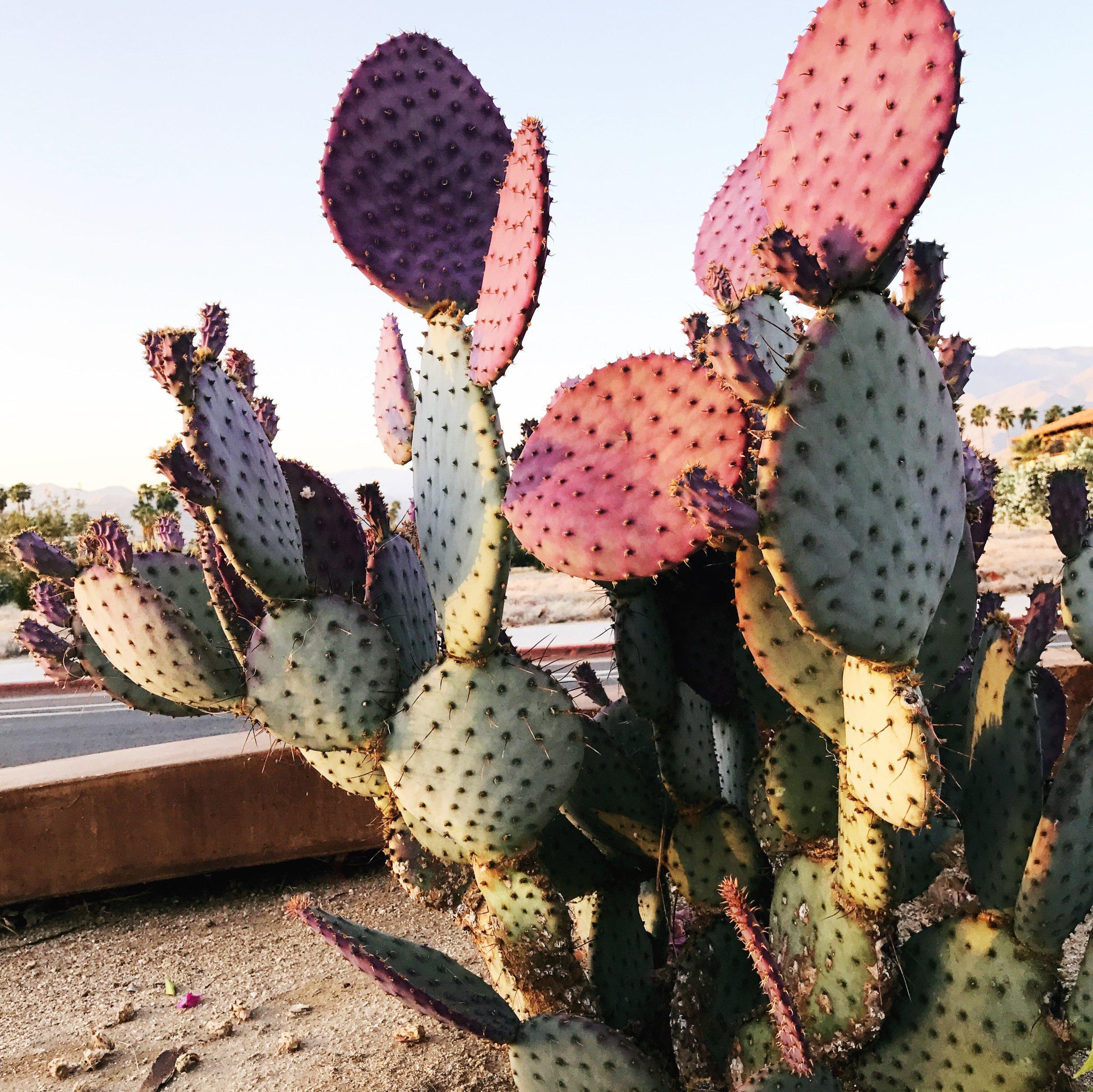 pink_cactus.JPG