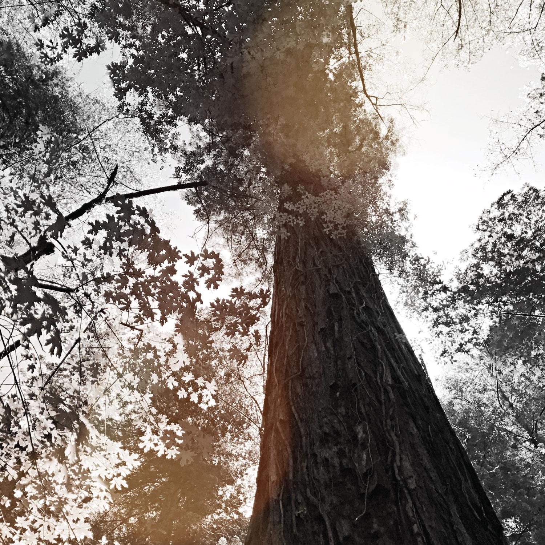 titans_trees_sq_3.jpg