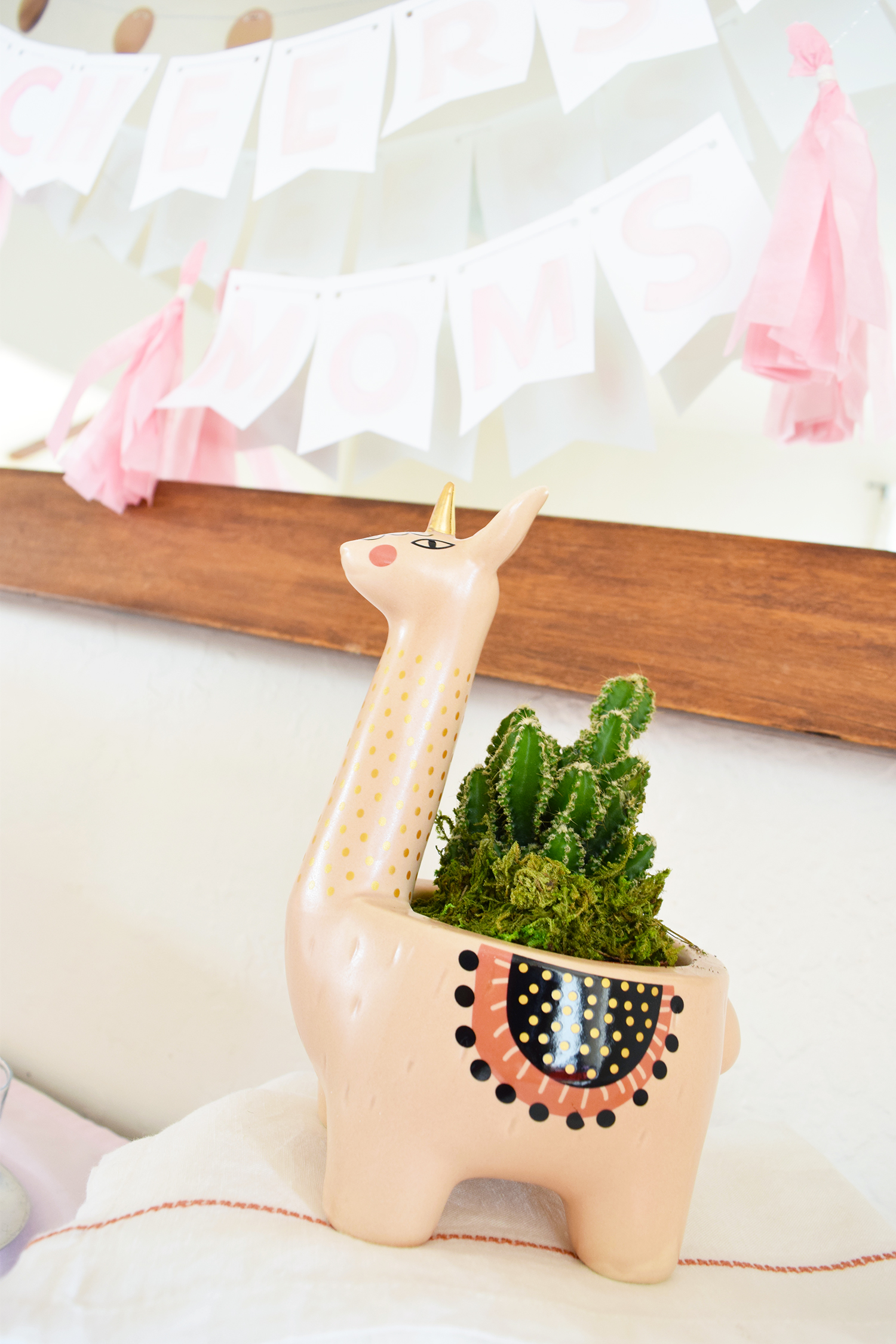 Llamacorn Cactus Plant From ProFlowers. It's adorable!