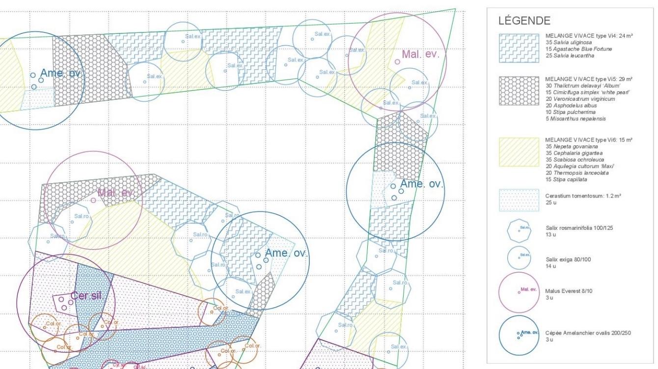 PRO plan plantation.jpg