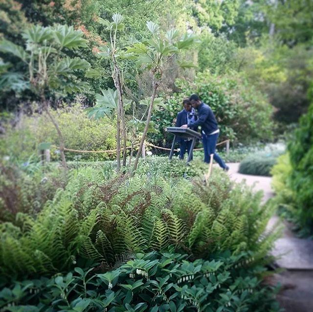 Visite du jardin botanique de la tête d'Or à la recherche des vivaces qui constitueront mon futur jardin d'ombre.  #paysagiste  #tetrapanax  #sceaudesalomon  #etpleindautreencore
