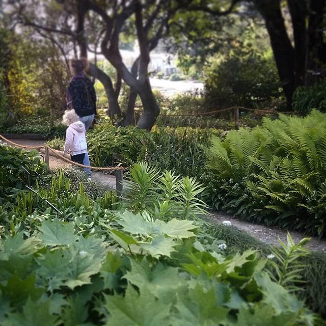 En quête d'inspiration pour composer la palette végétale d'un futur jardin de sous-bois.  #palettevegetale  #ombre  #fraîcheur  #têtedor  #ilovemyjob  #jardinbotanique  #paysagiste  #fougeres  #sousbois  #lyon