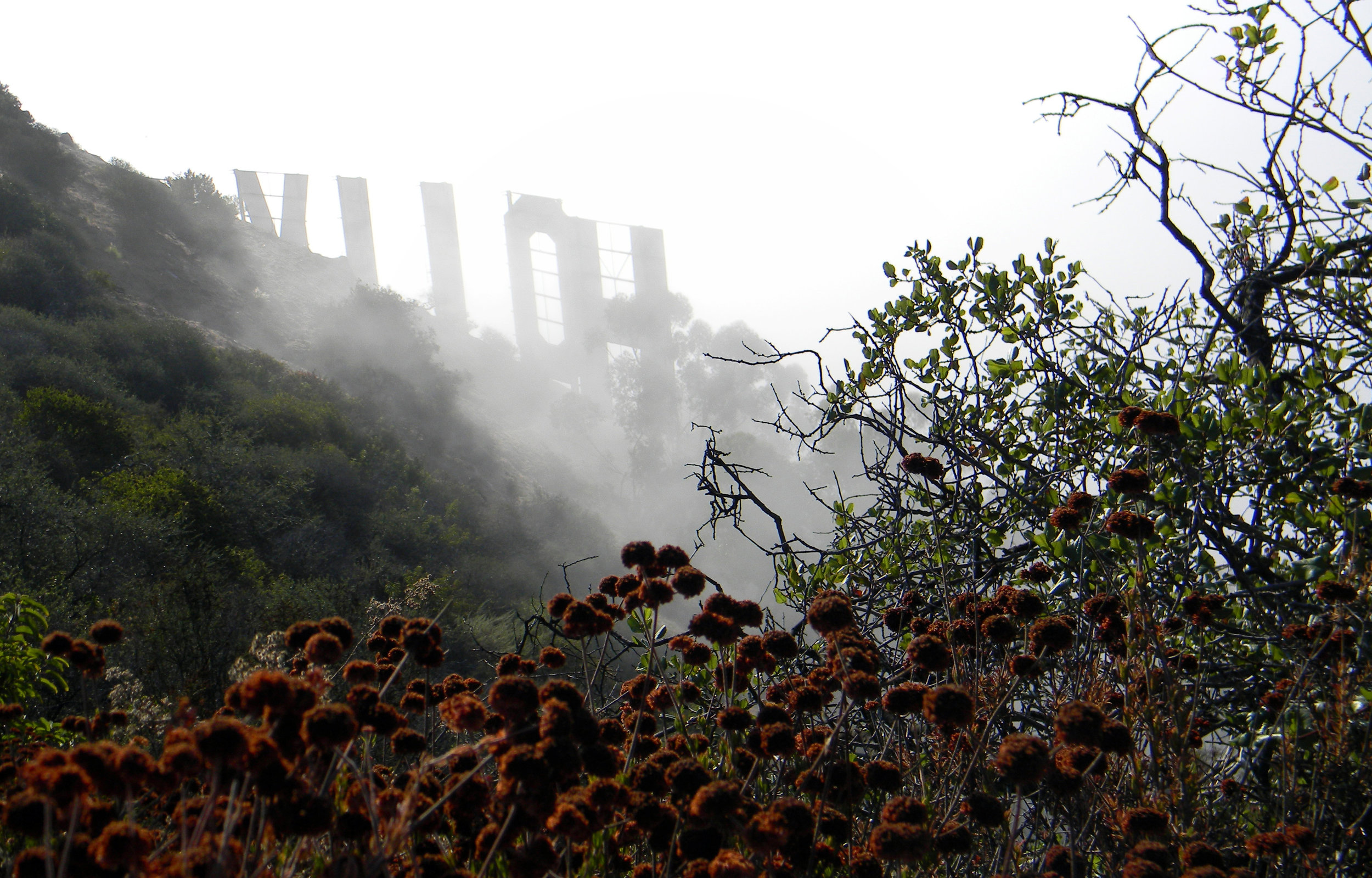 Hollywood Fog.jpg