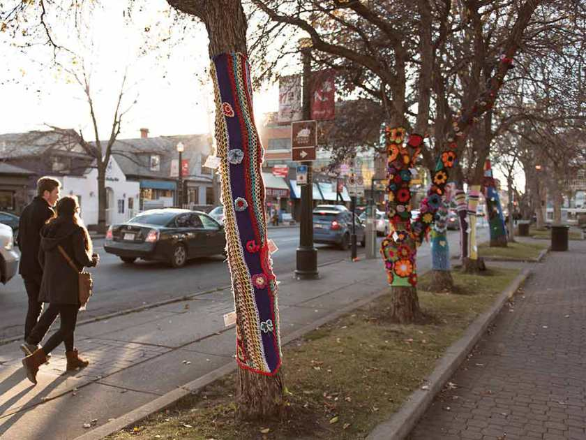 Some of the trees yarn bombed by the Ujamaa Grandmas.