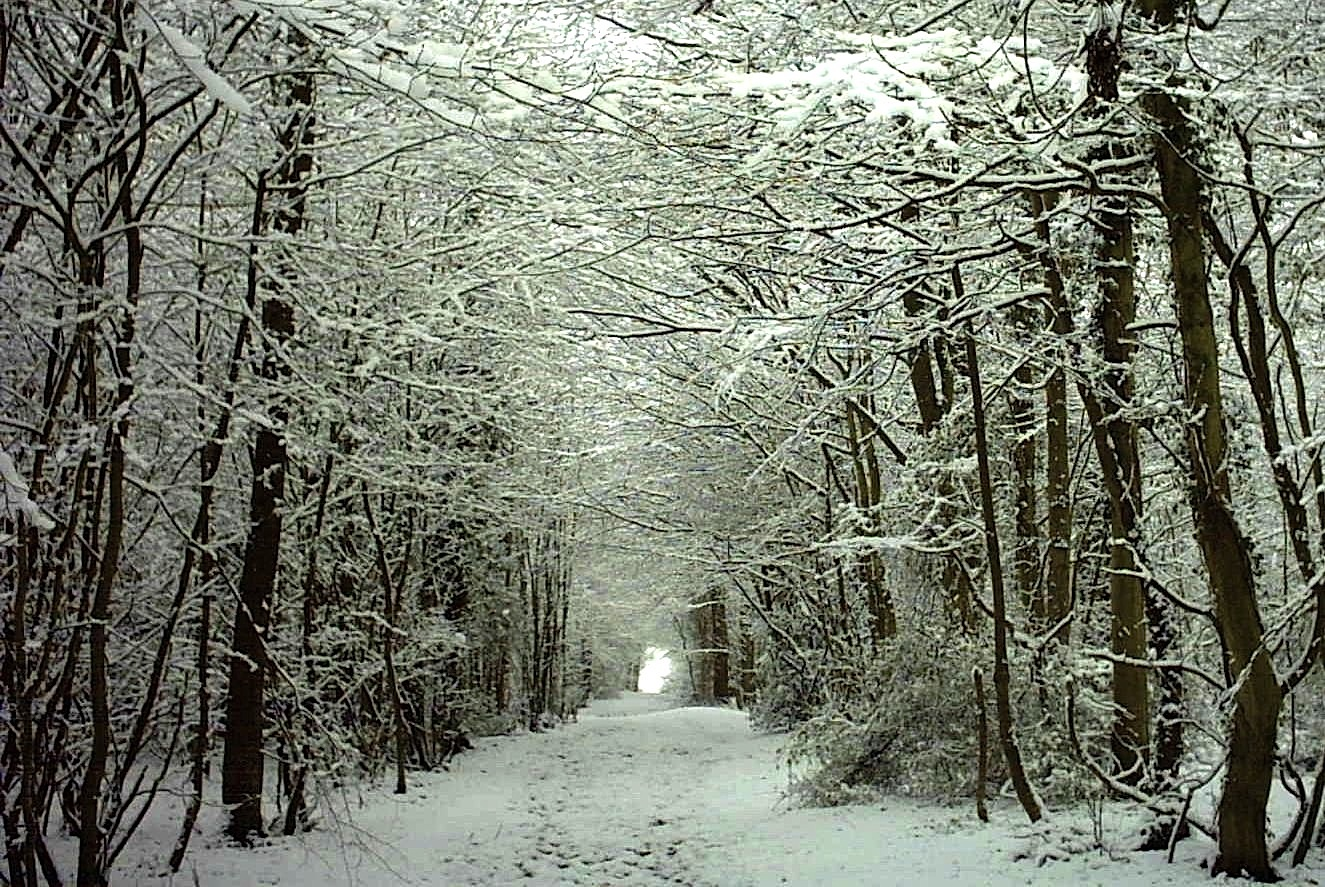 winter time woods walks in nature for immune boosting immunity and stress reduction with Health and Wellness Coach Andrea Rennie of Grow Happy Grow Healthy in Ithaca NY