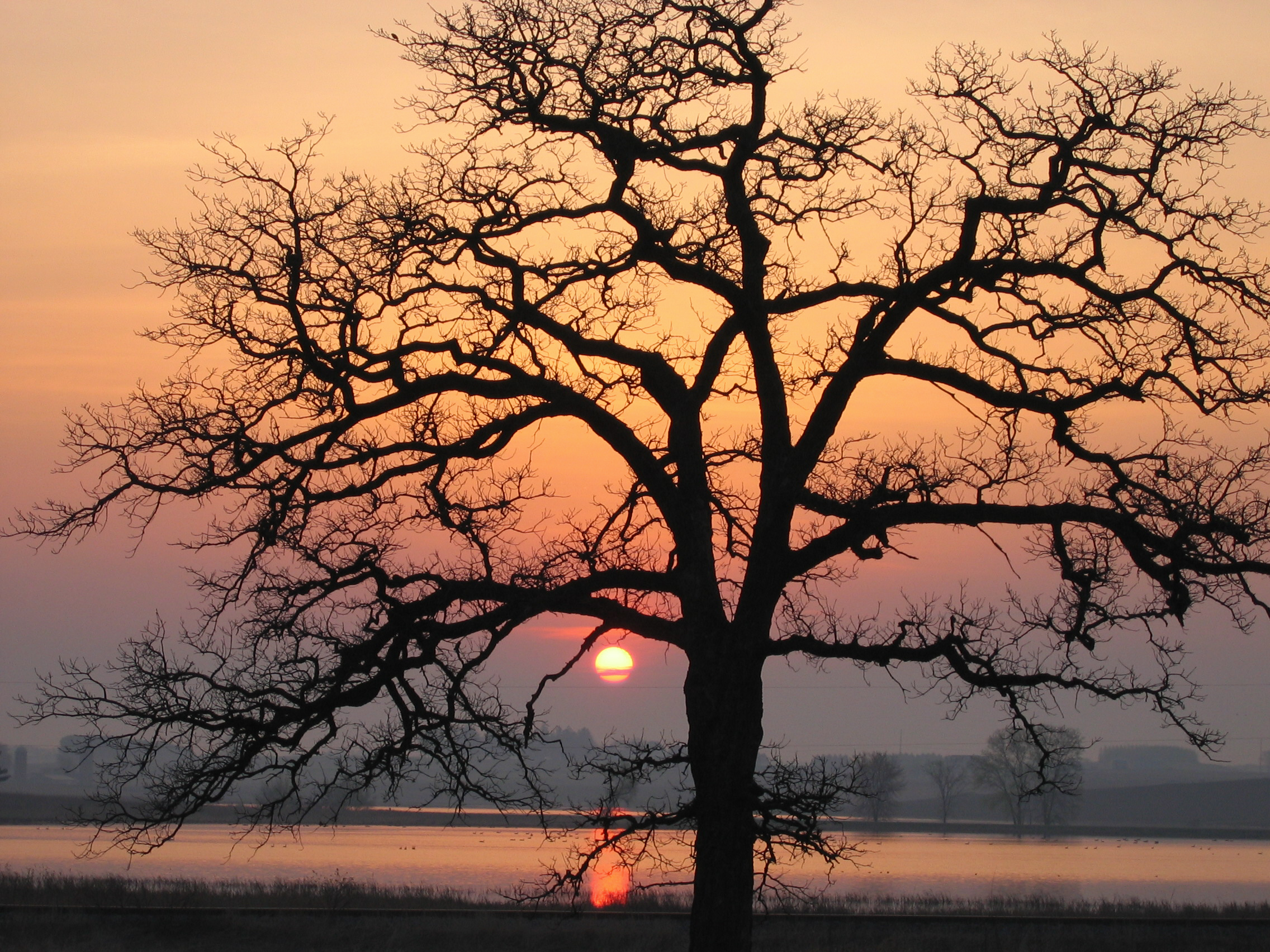 A stately oak frames sunrise at Goose Pond Sanctuary