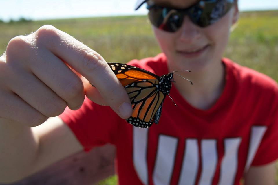 Tagging monarch butterflies for citizen science research efforts