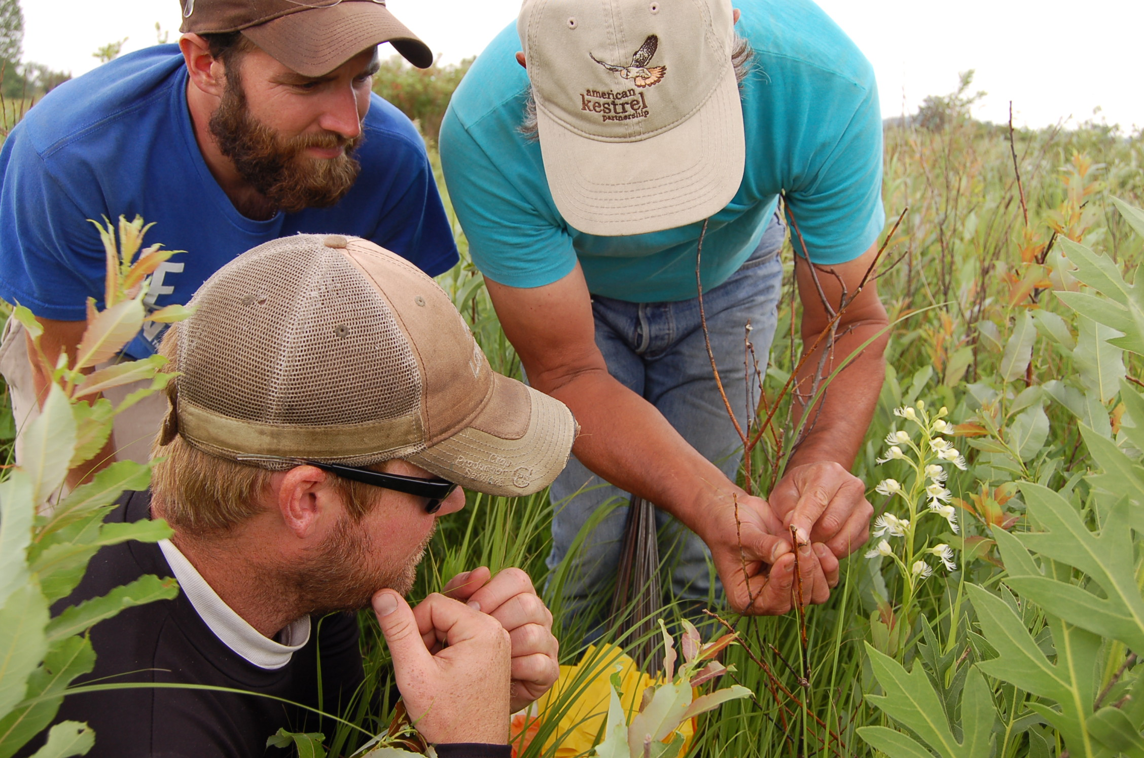 Sanctuary manager David Musolf explains pollination of the state-endangered prairie white-fringed orchid.