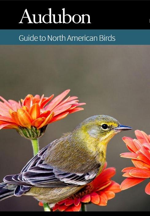 AudubonOnlineGuide