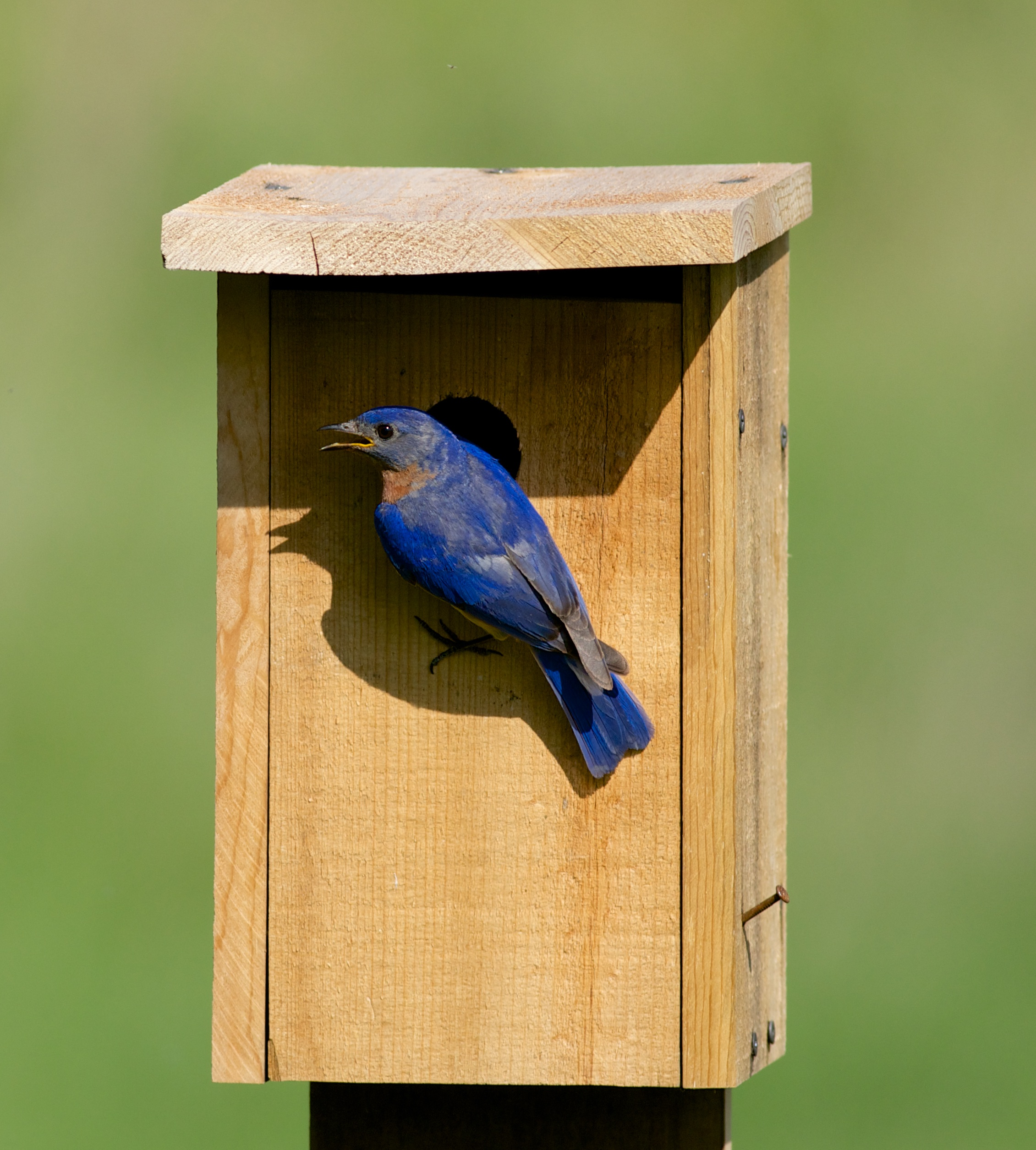 Help collect data on Wisconsin's eastern bluebird populations.  Photo by Arlene Koziol