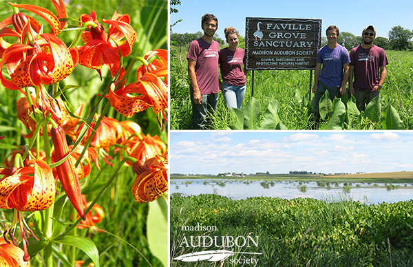 The Restoration Ecology Interns spend much of their time on our two sanctuaries, Faville Grove (top right) and Goose Pond (bottom right), as well as other locations. Michigan lilies (left;  photo by Roger Packard ) are just one of the many beautiful species interns will work with during the internship.