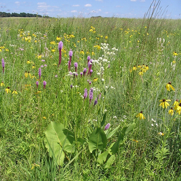 Prairie landscape at Faville Grove Sanctuary,  photo by Roger Packard