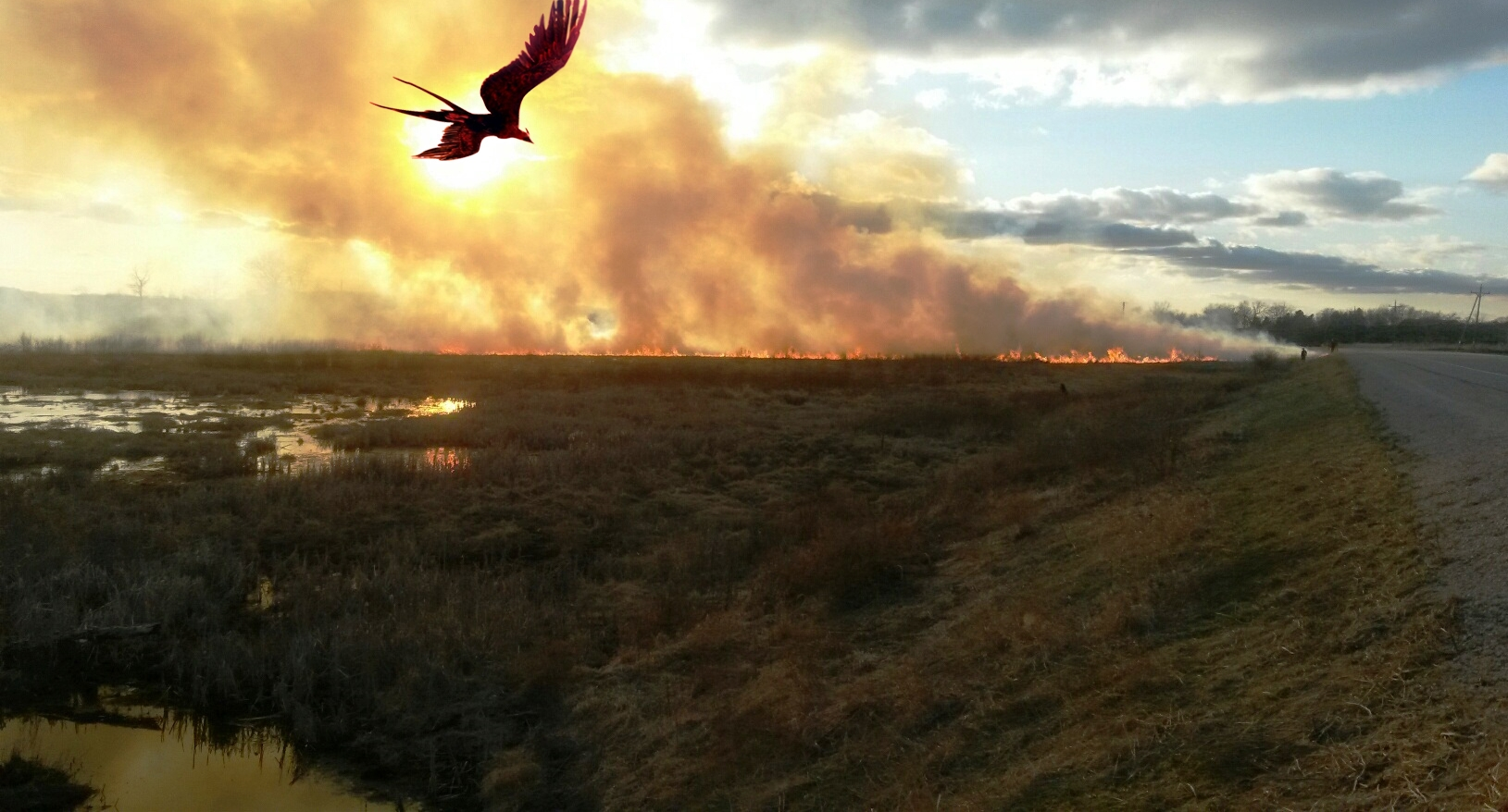 A phoenix flies on graceful wings over Buddy's Prairie at Faville Grove Sanctuary (photography credit: Drew Harry and Mikhail Fernandes)