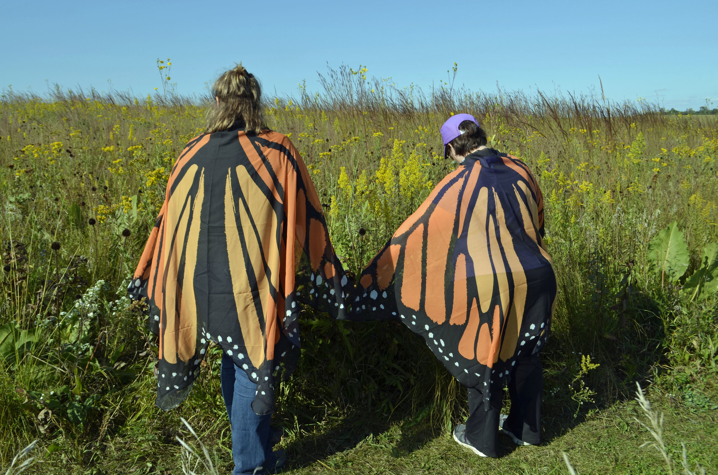 Giant monarch twins feasting on showy goldenrod.  Photo by Mark Martin