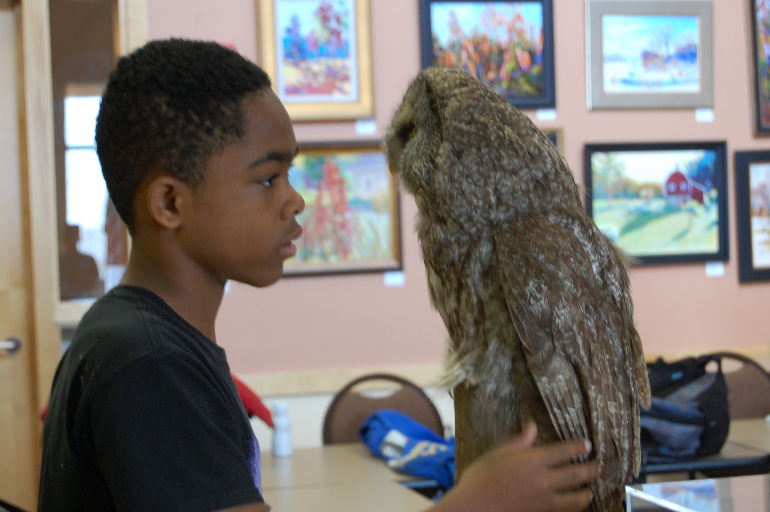 Face to face with Wilson, the MAS stuffed Great Gray Owl (Vera Court)