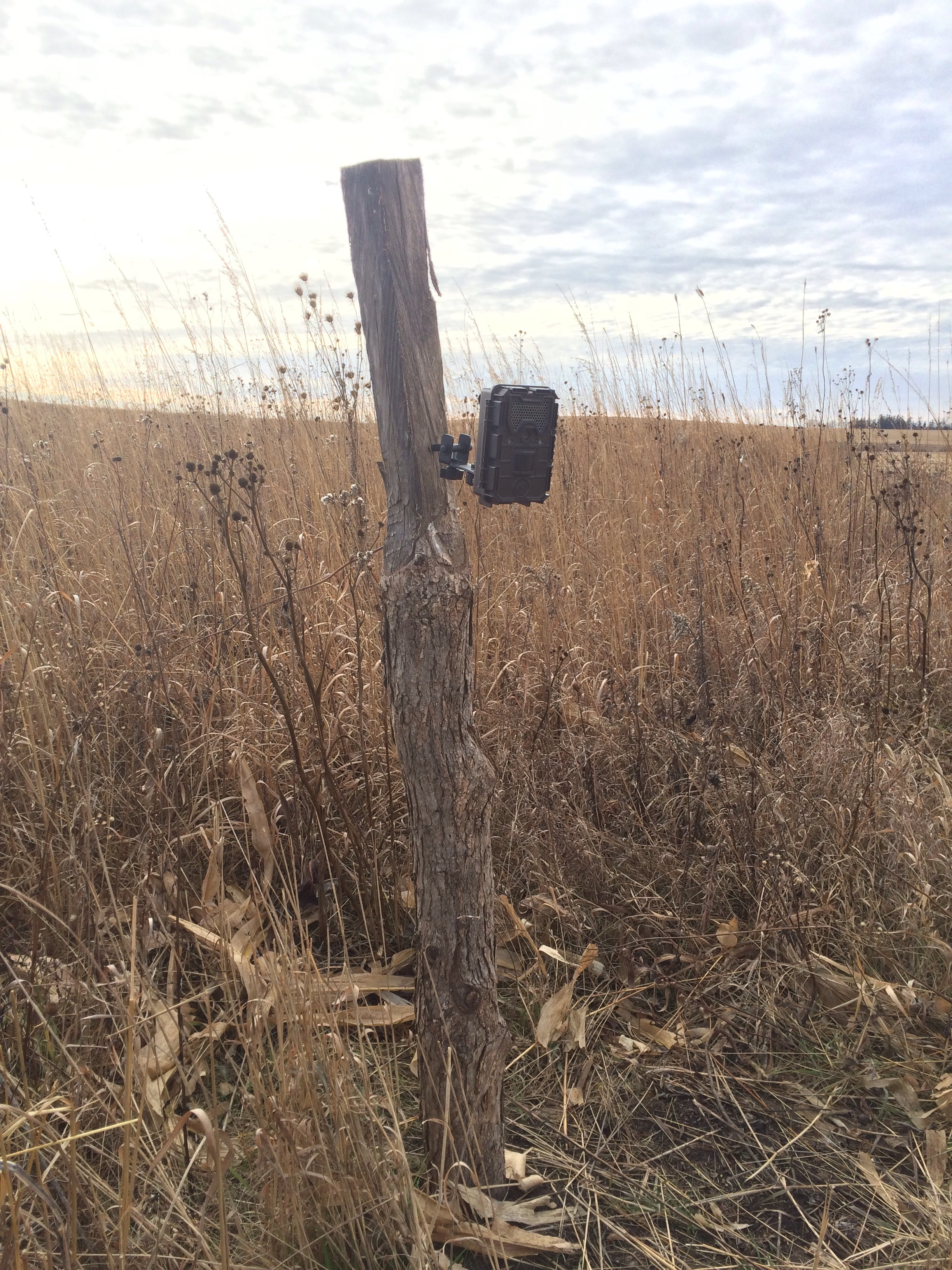 Goose Pond Sanctuary's new camera trap, part of the Snapshot Wisconsin program. Photo by Maddie Dumas