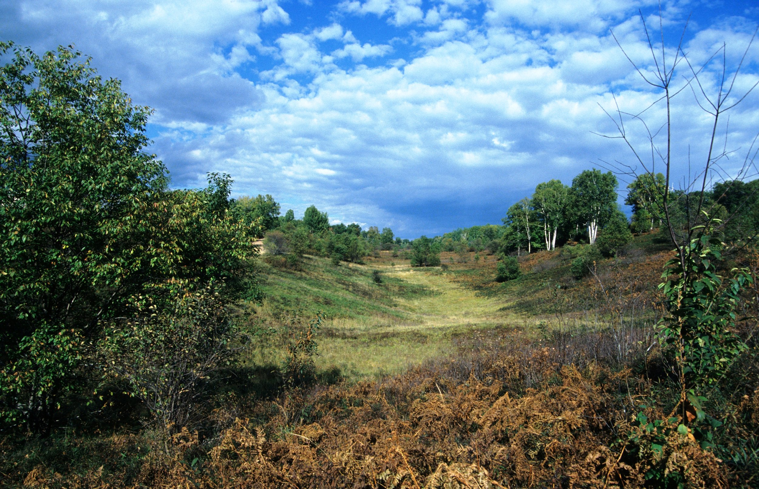 Spread Eagle Barrens in northern Wisconsin, comprised of bracken grassland and scattered with jack pine, red pine, scrub oak, and quaking aspen. Photo by Wisconsin Department of Natural Resources