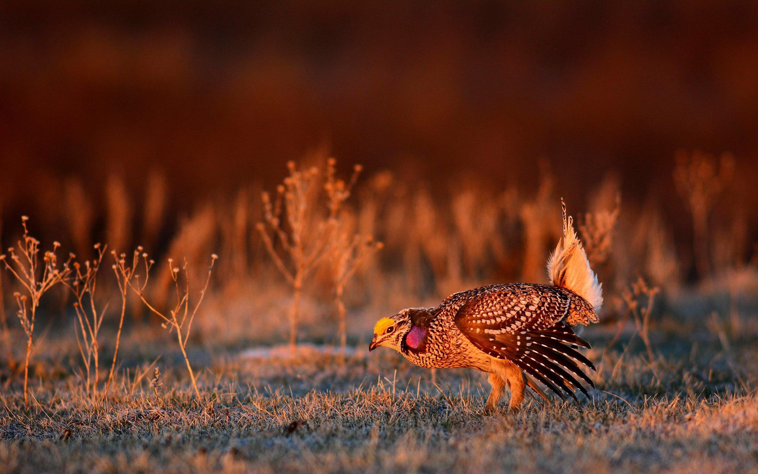 Photo by US FWS Mountain-Prairie