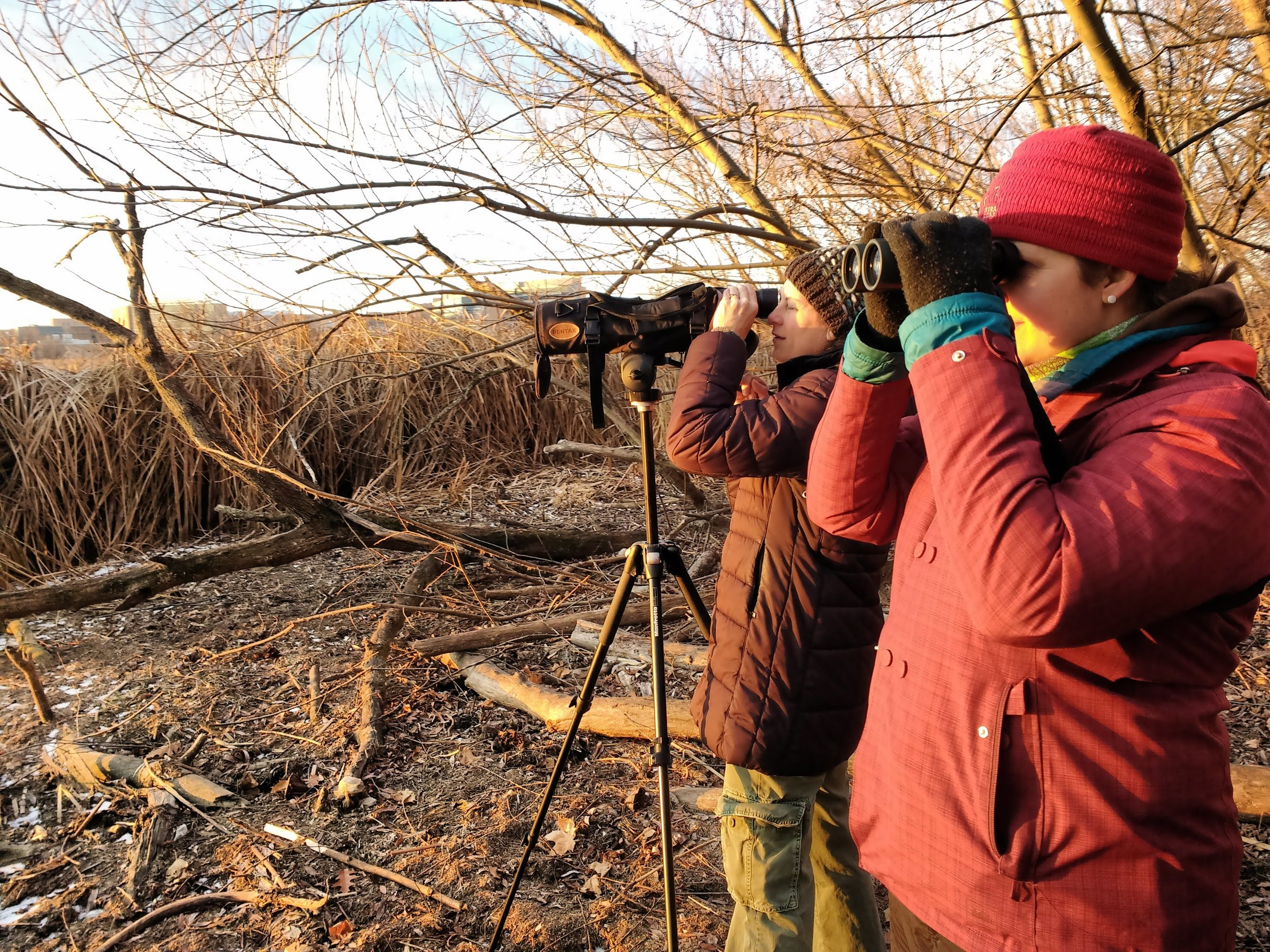 Holiday birders are searching for feathered friends on Lake Mendota during the 2017 Christmas Bird Count. Photo by Carolyn Byers.