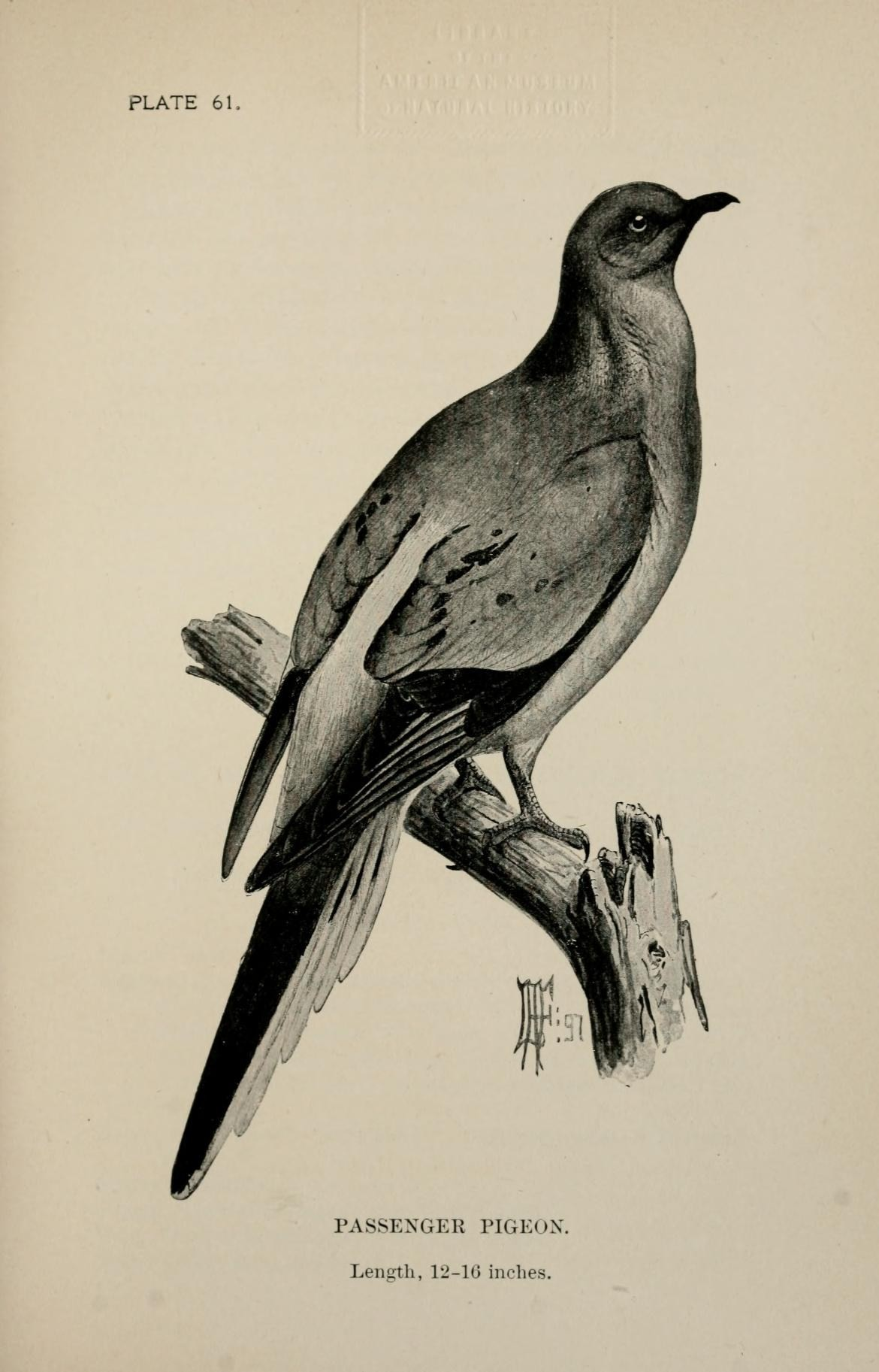 Artwork provided by Biodiversity Heritage Library