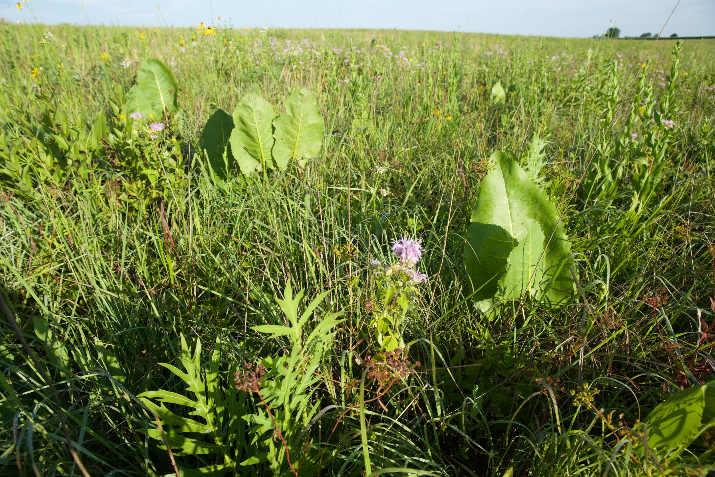 Goose Pond Sanctuary is home to hundreds of acres of restored grasslands, some of the few remaining in Wisconsin. Photo by Arlene Koziol
