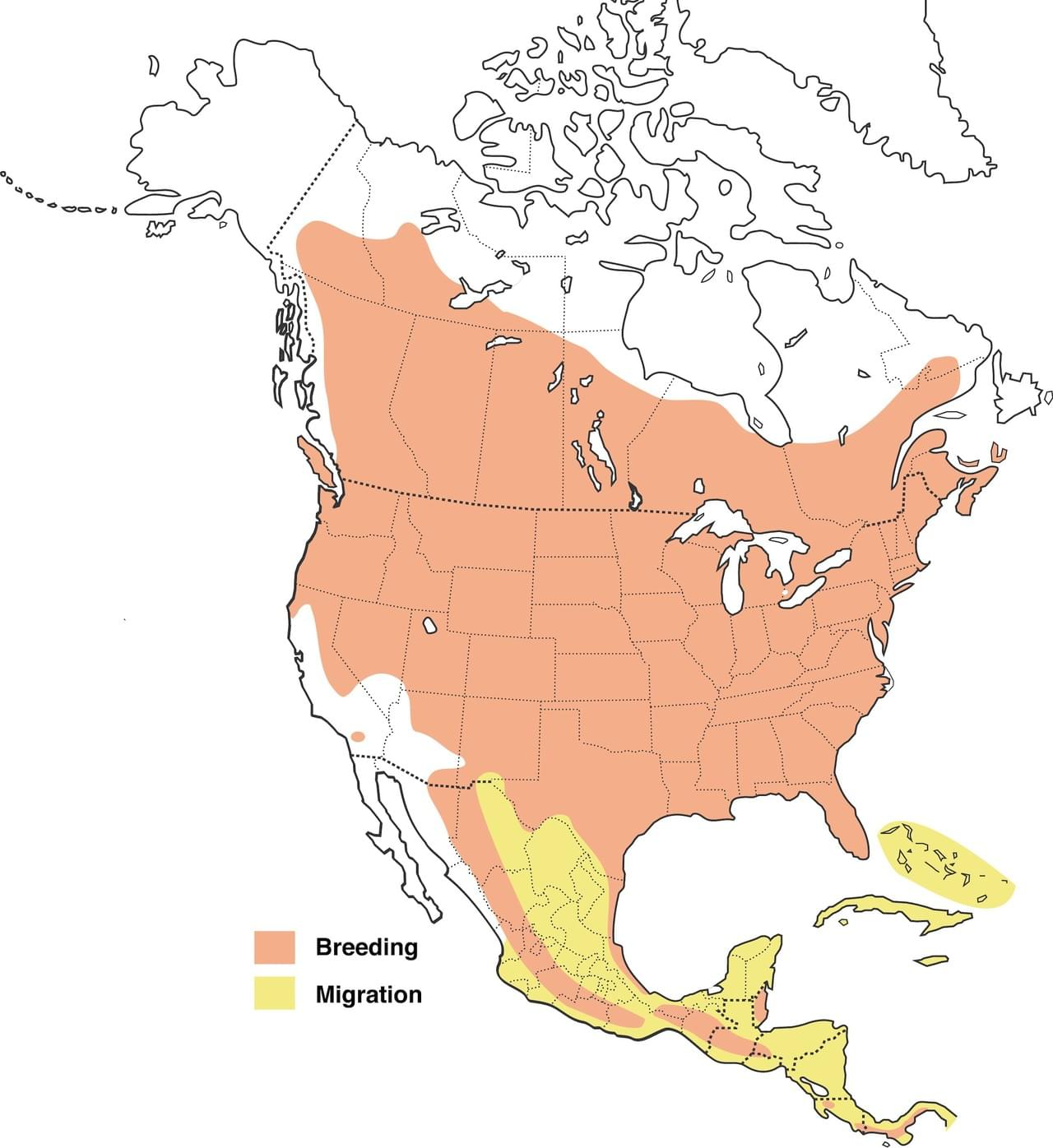 Common Nighthawk range map and migration info provided by Cornell Laboratory of Ornithology