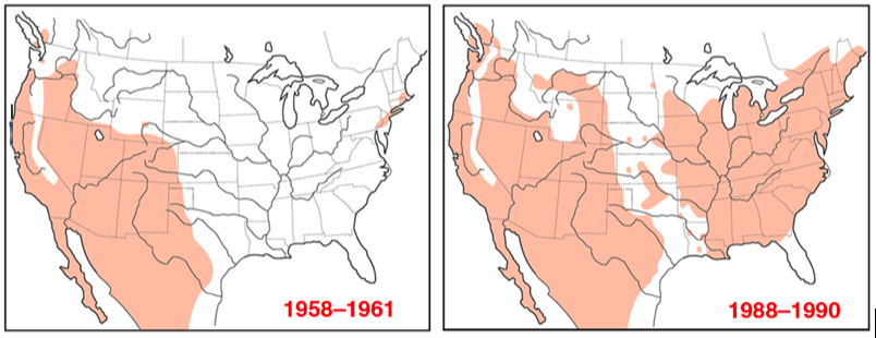 Range expansion of the house finch.  Image by Cornell Lab of Ornithology