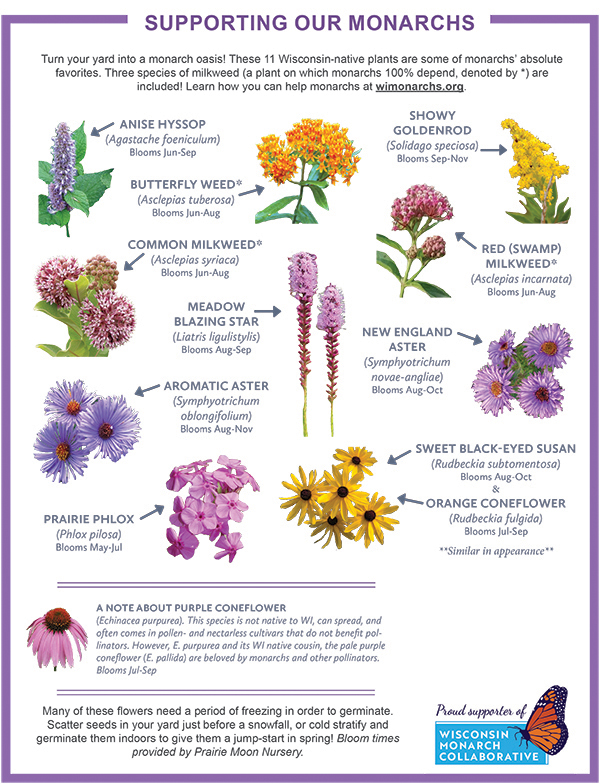 Image of 11 Wisconsin-Native plants hand-out, with space for your logo.  Download